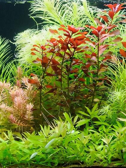 ooctopus_aquarium